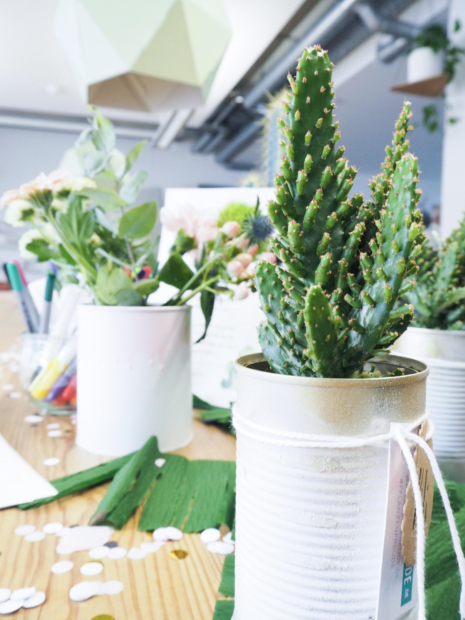Kaktus Tischdeko mit echten Kakteen